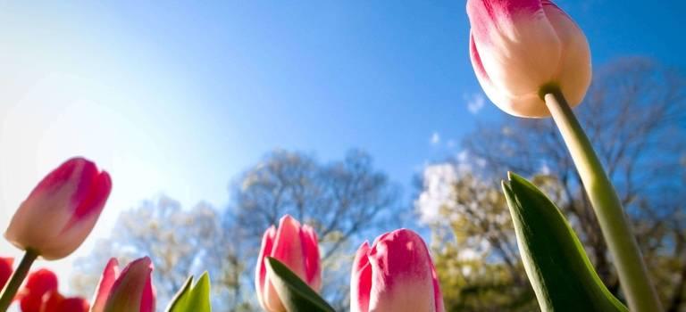 Пришла весна, пришло время покупать Volkswagen. Предложения, которые поднимут Вам настроение!
